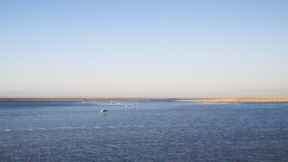 Laguna Chaxa Salar de Atacama Chile